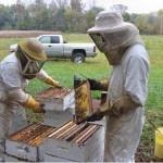 Honey Farm...