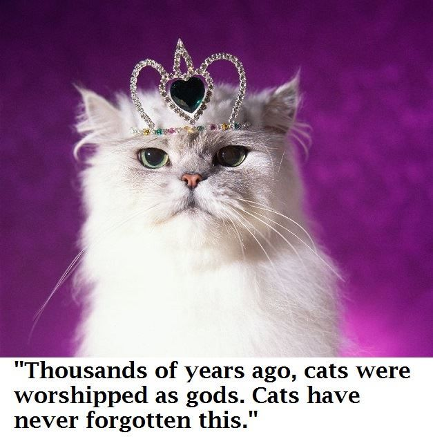 CAT QUOTES BY SUBJECT  THE GREAT CAT