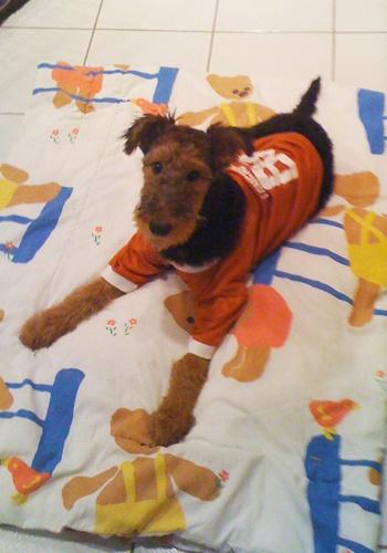 Laika is rocking the burnt-orange jersey.