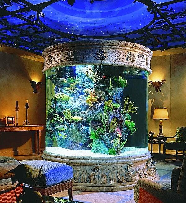 Indoor Aquarium For The Home Pinterest