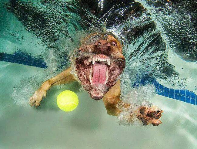Lol dogs underwater Pets Pinterest