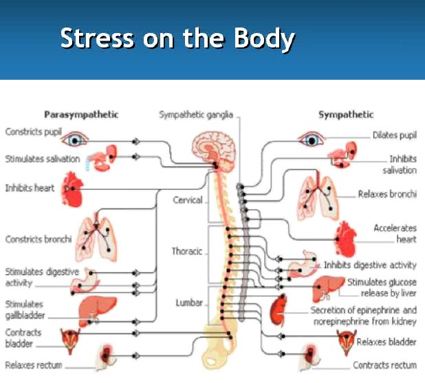 thesis on english stress Stress causes / produces / results in low exam scores  while writing a cause / effect essay, the order of the main points given in the thesis .