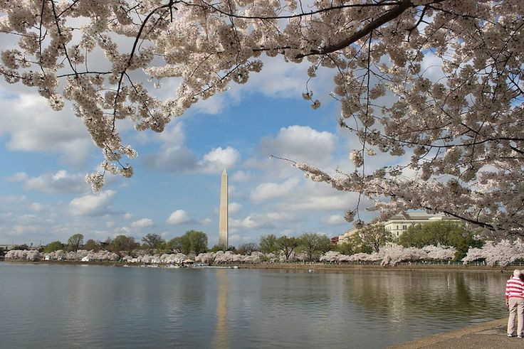 There is Much More than Monuments in Washington DC
