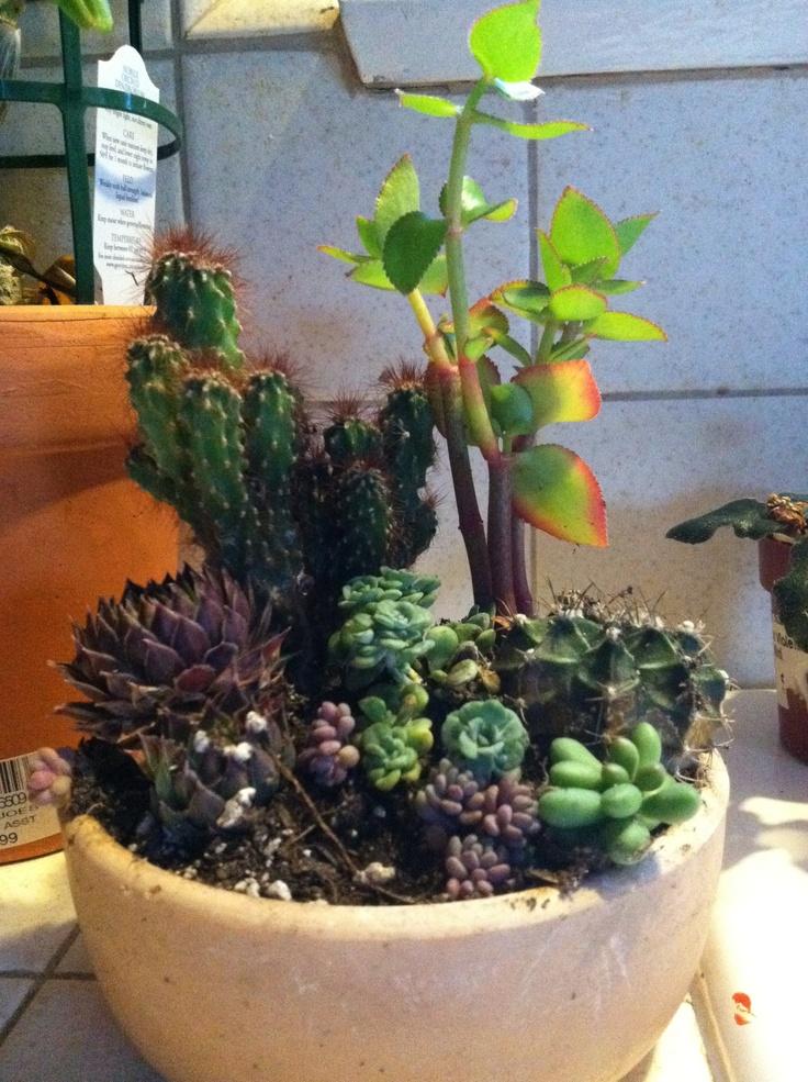 Indoor succulents plants pinterest - Best indoor succulents ...