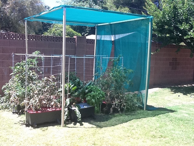 shade structures for tomatoes gardening and backyard