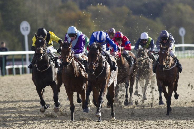 lingfield racing results