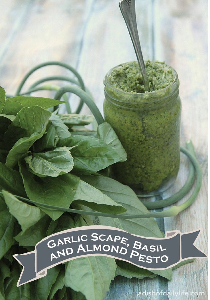 This Garlic Scape, Basil and Almond Pesto Sauce makes a great dip ...
