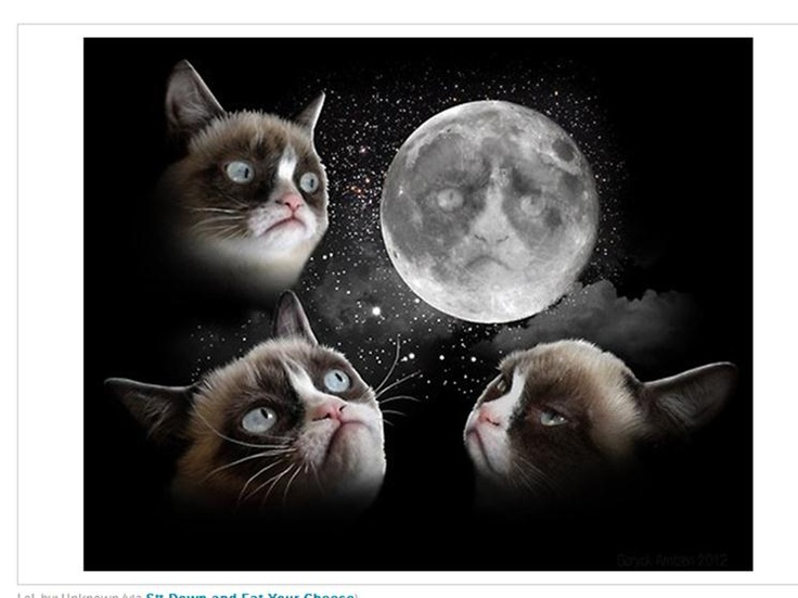 Grumpy Cats Space