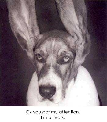 All ears dogs and dog stuff pinterest