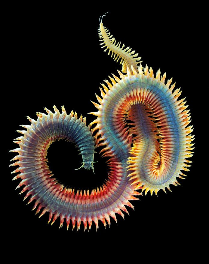 WoRMS - Photogallery
