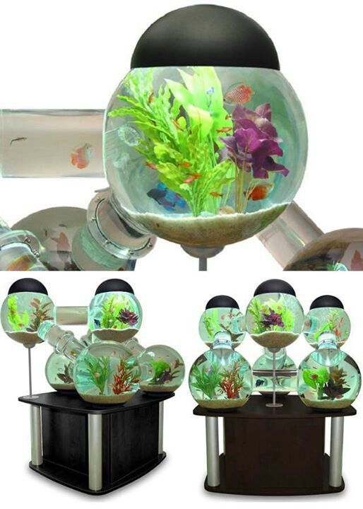 Cool fish tank beta fish pinterest for Awesome fish tanks