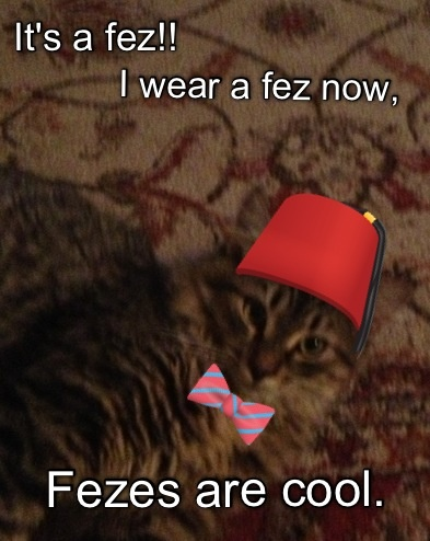 Fezzes are cool to Winston the cat - Fezzes Are Cool Cat