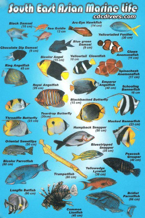 List of fish of Hawaii  Wikipedia