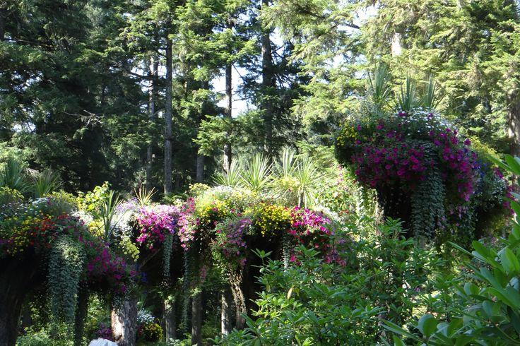 Glacier Gardens Near Juneau Alaska Places We 39 Ve Been