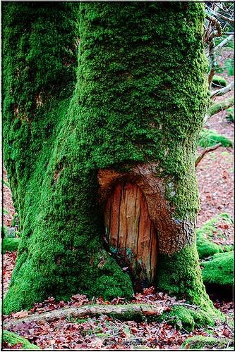 Tree door... Let's go exploring!