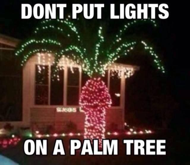 Dont put lights on a palm tree christmas christmas lights christmas decorations christmas humor funny christmas