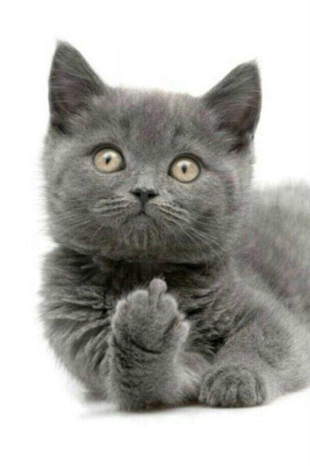 Naughty Kitten!!! ;)
