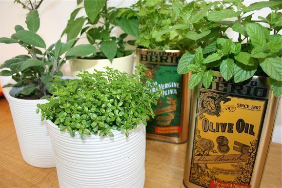 Kitchen Herb Garden Garden Pinterest