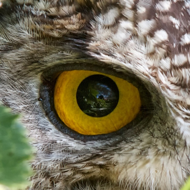 Owl Eye | Beautiful fl...