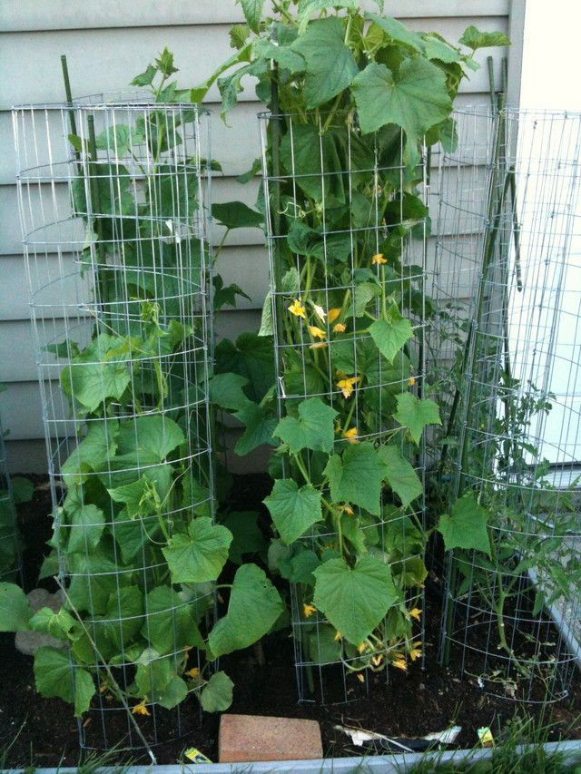 Pin by judy barsch on gardening pinterest - The garden web forum ...