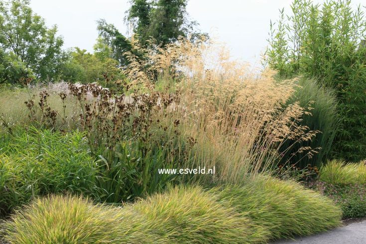 Landscaping Native Grasses : Transition from lawn to native grasses landscaping