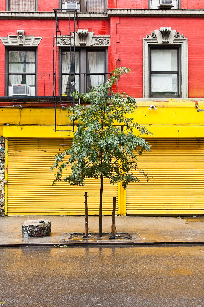 Yellow doors, red building, green tree // Tim Melideo