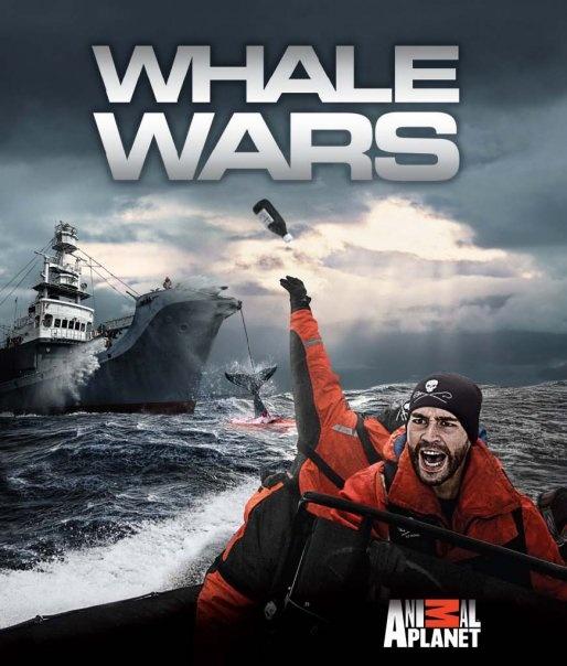 Whale Wars Season 4 Episode 5 Watch