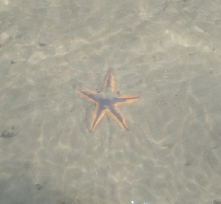 Starfish... Crescent Beach, FL