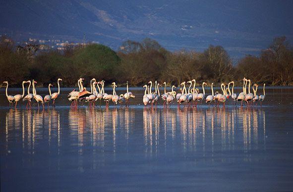 Kerkini lake  the other greece  Pinterest
