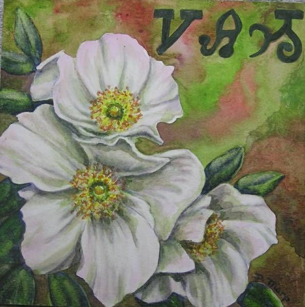 Cherokee Rose Tattoos And Body Art Pinterest