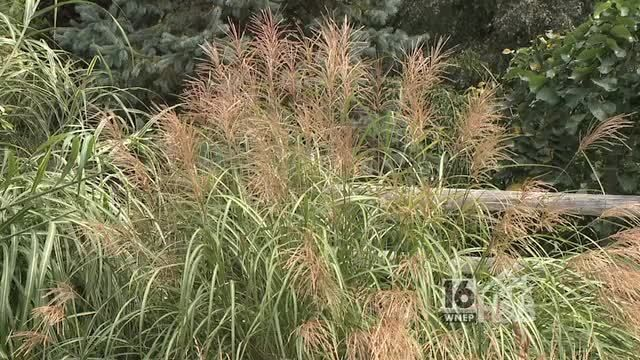 Pinterest gardening ideas with ornamental grasses photograph for Ornamental grasses for small spaces
