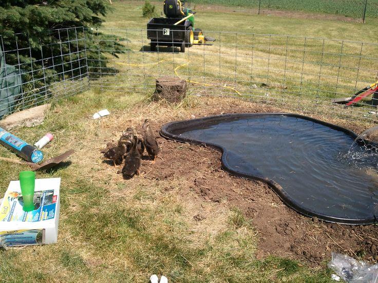 Backyard Duck Pond Ideas : duck pond  Google Search  Ponds  Pinterest