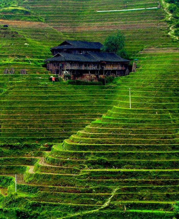 Rice terrace china places pinterest for What are terraces