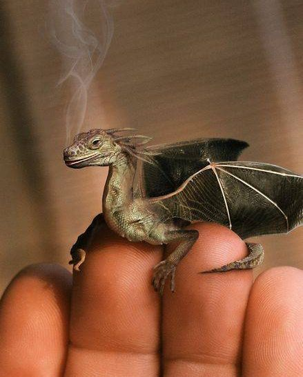 Norbert of Harry PotterDragon Harry Potter Norbert