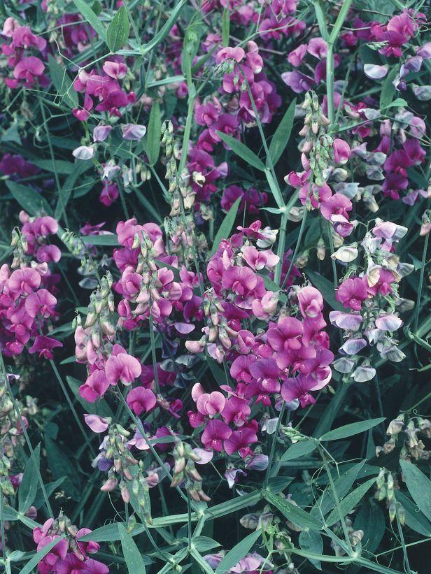 Climbing Plants For Shade Soil Plants Pinterest