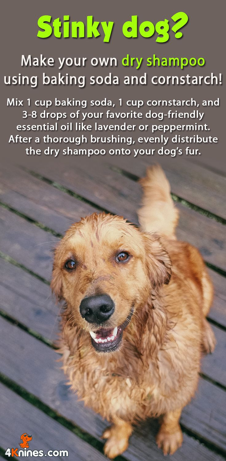 Mix 1 cup baking soda, 1 cup cornstarch, and 3-8 drops of your favorite dog-friendly essential oil like lavender or peppermint.