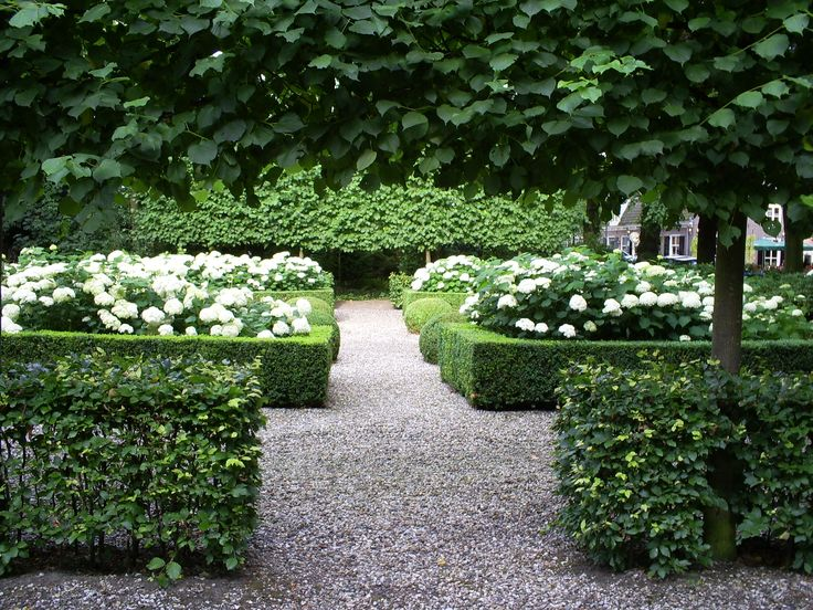 Symmetry Hedges of Fagus sylvatica and Tilia europaea 'Pallida', Buxus and Hydrangea arborescens 'Annabelle'.