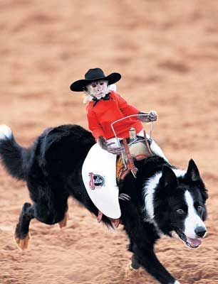 Monkey Riding Dog Rodeo Video