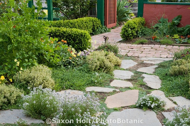 Low growing ground cover herbs garden art seedoasis for Low growing plants for landscaping
