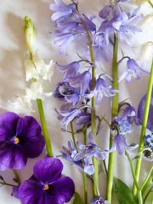purple spring blooms