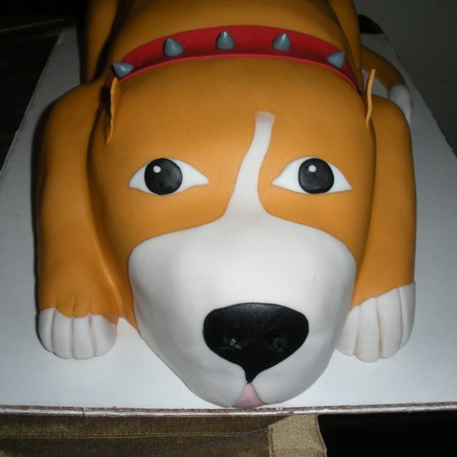 pitbull birthday cakes