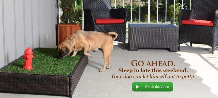 Dog Pee Area In Backyard : Slide 1  Fido Shop  Pinterest