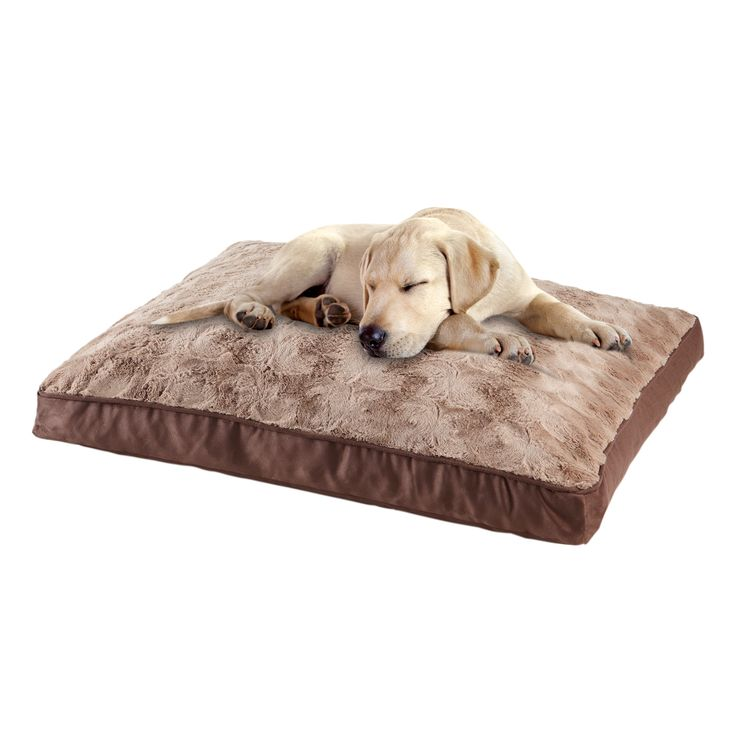 Animal Planet Pillow Pal : Animal Planet Swirl Top Memory Foam Pet Bed (40 x 27 x 4)