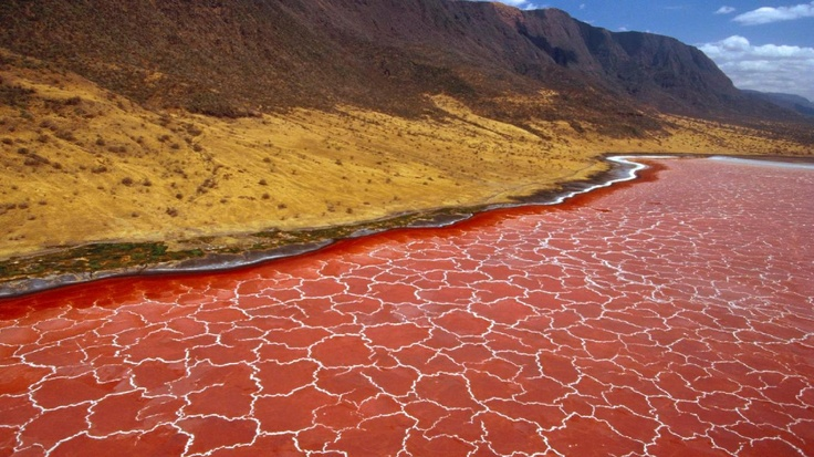 Lake Natron, Tanzania. The colour comes from a red pigment in cyanobacteria, which feed on high levels of salt in the lake.