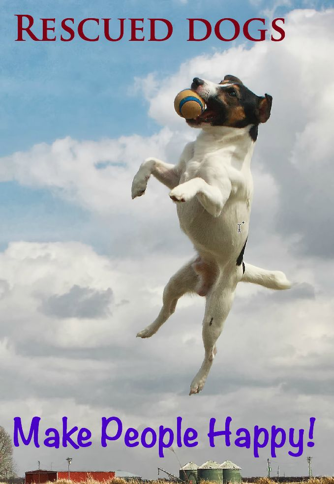 Chances Rescue Dogs