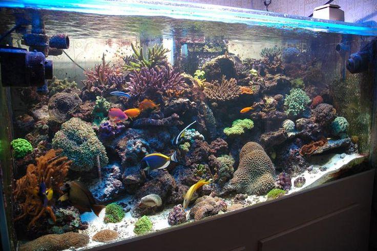 Saltwater Aquarium cool fish tanks Pinterest