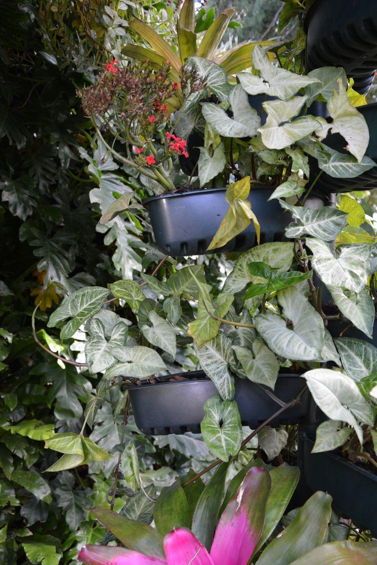 jardim vertical irrigacao automatizada:Também pode ser utilizado como um pequeno jardim dentro de casa, com