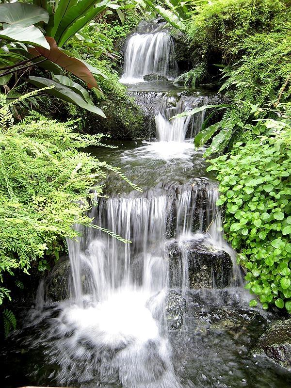Air Terjun Mini Buatan Di Taman Rama-Rama in Flora N Fauna by