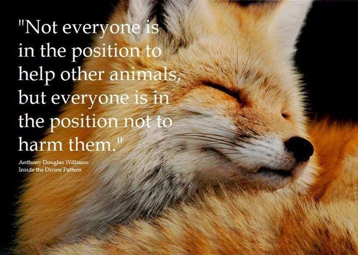 What did the fox say animal friends pinterest