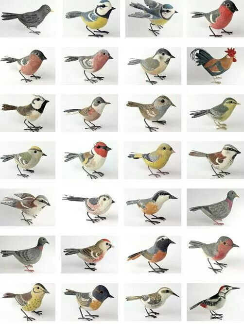 Different types of bir... Different Kinds Of Birds